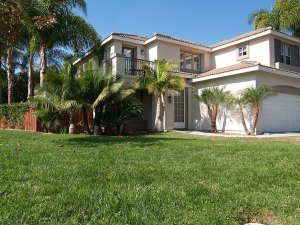 Choose healthier and sustainable alternatives to turfgrass and palm trees.