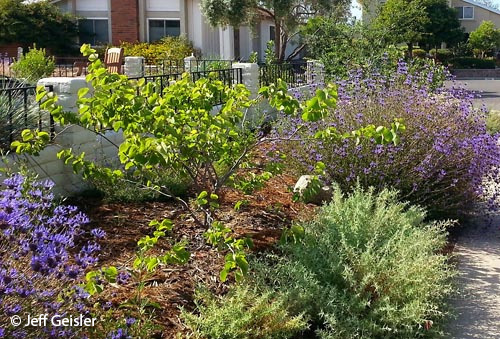 San Diego Native Plants Garden Native Tour 2016